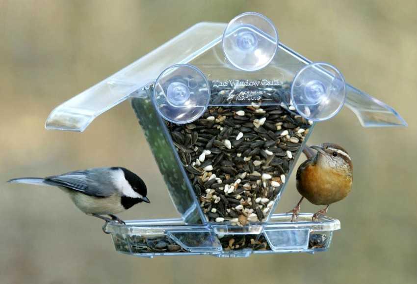 Кормушка для птиц из пластиковой бутылки: 700 фото, инструкции