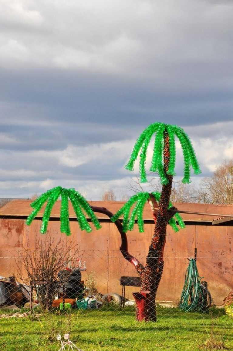 Картинки пальмы вечером тот
