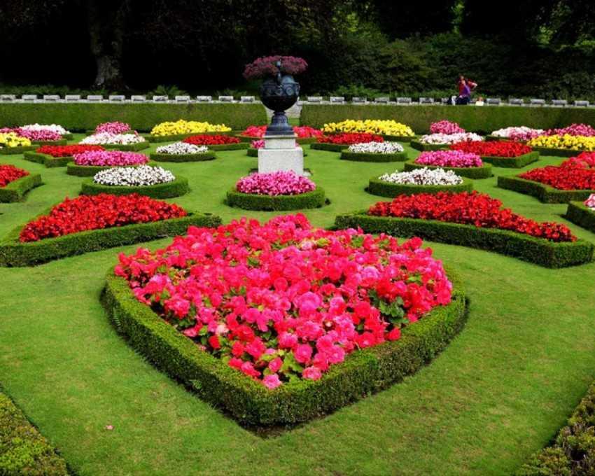 использовал красивые цветы для клумбы фото и названия кладези